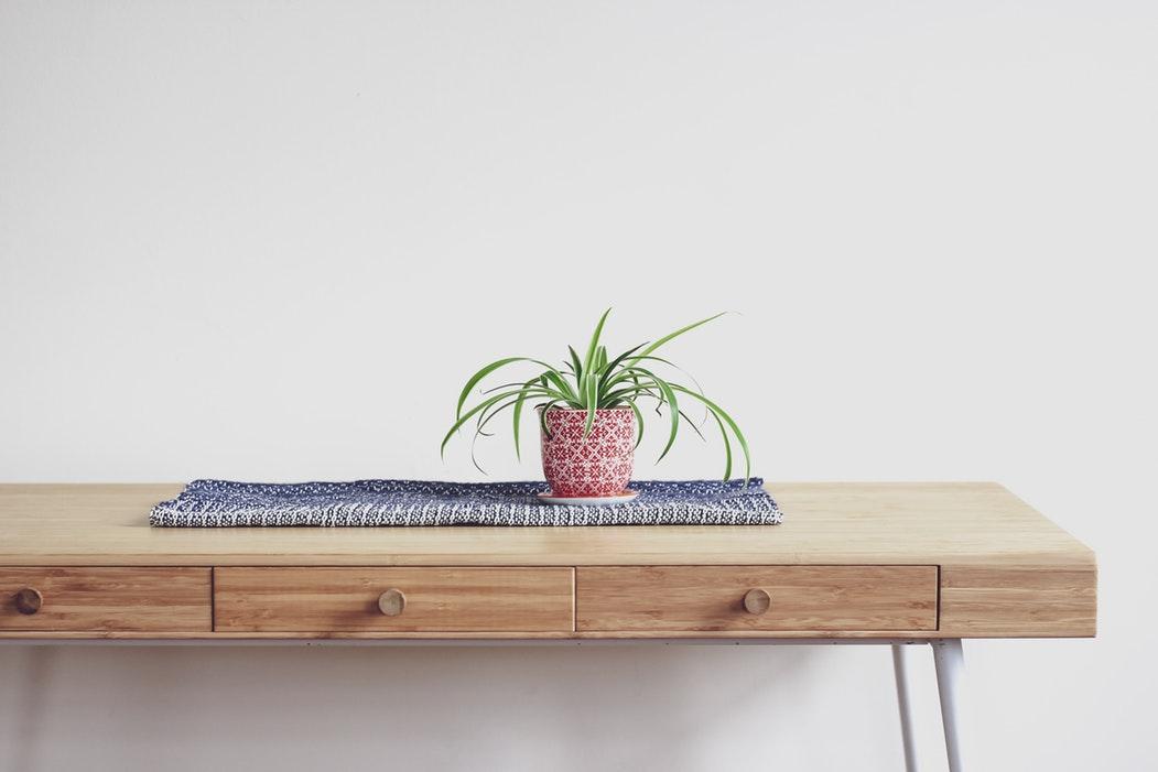 Plante sur une table devant un mur clair