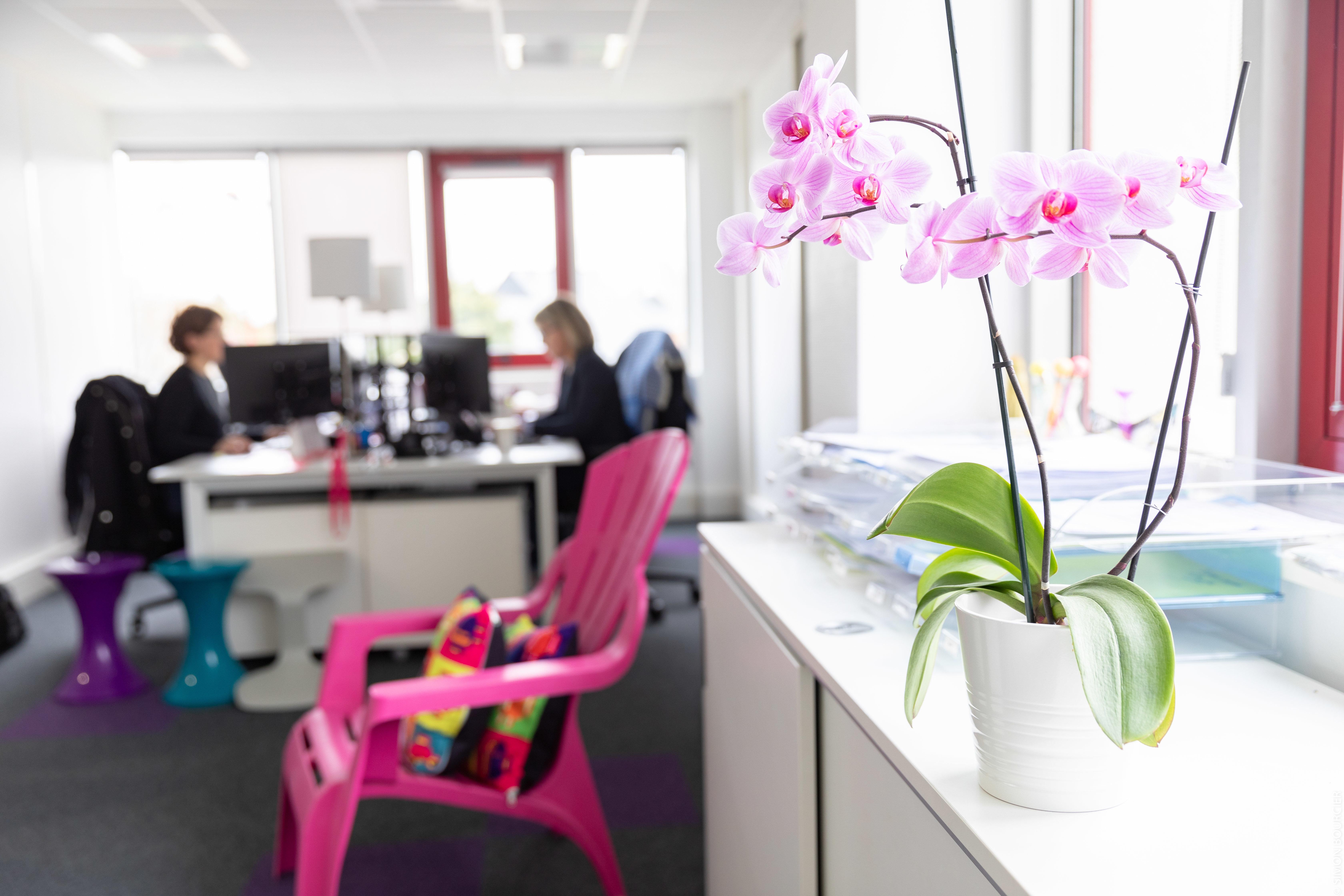 Bureau avec orchidée rose au premier plan et deux personnes qui travaillent en fond